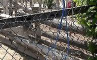 Dây điện dính hàng rào làm bé gái 13 tuổi tử vong