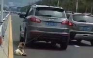 Người tài xế mất nhân tính kéo lê chú chó tội nghiệp đến chết trên đường phố