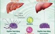 Cách bảo vệ gan trước nguy cơ thực phẩm bẩn