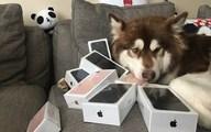 Thiếu gia giàu nhất Trung Quốc mua 8 chiếc iPhone 7… cho chó