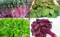 Tự trồng 5 loại rau mùa hè vừa dễ vừa mau thu hoạch