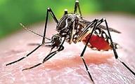 TP.HCM chính thức công bố dịch bệnh do virus Zika