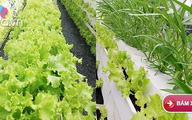 Mô hình trồng rau sạch thổ canh từ sáng chế độc đáo của chàng trai 8X ở Sài thành