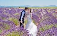 Ảnh cưới đẹp tuyệt của cặp đôi Việt trên cánh đồng Lavender