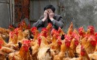 Thêm diễn biến nguy hiểm của chủng virus cúm A/H7N9
