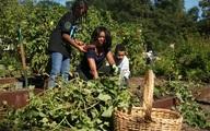 'Số phận' vườn rau của Michelle Obama trong Nhà Trắng