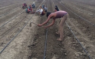 Thạc sĩ ngân hàng bỏ việc về quê làm nông dân