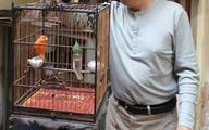Hái ra tiền nhờ nuôi loài chim quý tộc