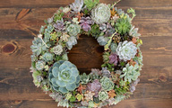 Ý tưởng làm vòng treo trang trí vườn vừa đơn giản vừa đẹp từ những cây mọng nước