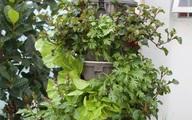 Kinh nghiệm trồng rau sạch theo phương pháp thủy canh đáng nể của ông bố trẻ Sài Gòn