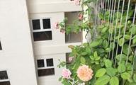 Ban công vỏn vẹn 6m² nhưng ngập tràn hoa hồng của bà mẹ hai con