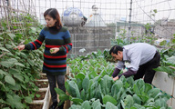 Vườn rau sân thượng đủ cho gia đình hàng chục người ở trung tâm Hà Nội