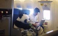 Khách đi máy bay thản nhiên phơi đồ lót, trồng cây chuối