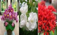 """Những loại hoa """"cháy hàng"""" tháng cô hồn vì nhà nhà đua nhau mua về cúng"""