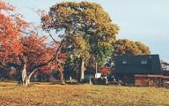 Cuộc sống yên bình bên ngôi nhà gỗ xinh xắn của gia đình 4 người ở vùng nông thôn