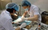 Khóc cười nghề làm bác sĩ cho… thú cưng