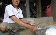 Tình tiết bất ngờ vụ nhặt được 3 cây vàng trong bao lúa