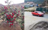 Diễn biến đầy bất ngờ vụ cây hoa hồng bị đánh cắp