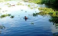 Hàng chục người tìm kiếm bé trai bị nước cuốn mất tích