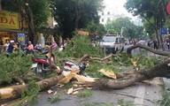 Hà Nội: Cây cổ thụ bất ngờ đổ sập khiến 3 người lớn và 2 trẻ em nhập viện cấp cứu