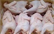 Gà Hàn Quốc bán đầy đường: Người nuôi cho thú cưng ăn?