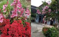 Ngôi nhà hoa trên đồi của phó hiệu trưởng ở Tuyên Quang