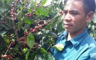 Chàng trai nghèo biến 1ha nương đầy cỏ dại bố mẹ cho thành đồi cà phê cho thu nhập cao