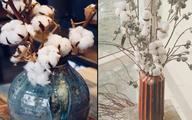Cỏ dại Bắc Âu về Việt Nam thành hoa cotton đắt giá