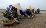 Huyện Quảng Xương (Thanh Hóa):  Gần Tết, dân lao đao vì ngao chết trắng