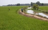 Phát hiện thi thể ở ruộng lúa nhờ tín hiệu lạ