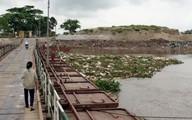 Hải Phòng: Kinh hoàng hàng trăm con lợn chết trôi sông, bốc mùi nồng nặc