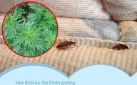 """Bọ rệp giường hoành hành ngày mưa ẩm, chỉ cần nguyên liệu này thôi là có thể """"đánh bay"""" bọn chúng, đặc biệt là số 1"""