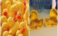 Trước vịt cao su của Trung Quốc chứa chất gây vô sinh, những loại đồ chơi nào cũng chứa chất độc?