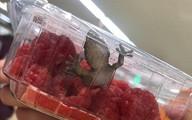 Chết khiếp, con tắc kè sống nguyên trong hộp trái cây siêu thị