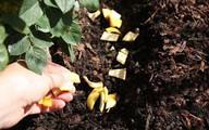 Không 1 giọt hóa chất, cả vườn rau bỗng lớn phổng, mướt mát chỉ nhờ 1 nắm vỏ chuối