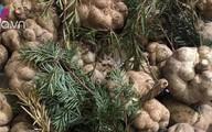 Thực hư công dụng của loại nấm nhiều người phải bỏ tiền triệu nhưng vẫn tranh nhau mua