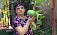 Khu vườn xum xuê cây trái trong căn nhà ở Mỹ của nữ danh ca có chồng làm kỹ sư cơ khí hàng không