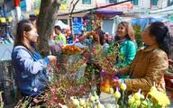 Từ ngày mai, cấm đường một loạt tuyến phố cổ để tổ chức chợ hoa Xuân 2020
