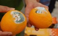 Đây là trái cây gây hại cho gan hơn rượu, rút ngắn tuổi thọ mà nhiều người vẫn cố ăn