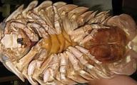 Loại bọ biển vài triệu đồng một con vẫn được săn đón