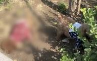 Hai mẹ con đang đi dạo thì thấy một chú chó qua đời bên đường, nhưng câu chuyện về con chó còn lại chứng kiến cảnh tượng này mới đau lòng