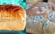 11 sự thật về bánh mì không phải ai cũng biết: Số 7 là 'món quà' hoàn hảo từ nước Đức