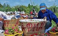 Gẩy tay rao hàng, lão nông bán chục tỷ tiền lươn, 26 tấn chôm chôm