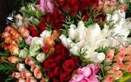 Hoa hồng Đà Lạt chỉ mong bán được 3.000 đồng/bông dịp 8/3 vì COVID-19