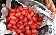 Thời tiết dị biệt, một trận trắng trời cả làng trồng nhót thất thu