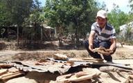 Tây Nguyên khô hạn trên diện rộng, dân lao đao vì thiếu nước ngọt