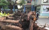 Lời kể ám ảnh của nhân chứng vụ cây phượng đổ khiến học sinh tử vong
