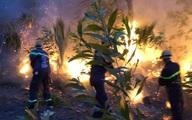 Nghệ An: Chủ tịch tỉnh chỉ đạo làm rõ nguyên nhân, thủ phạm gây ra cháy rừng