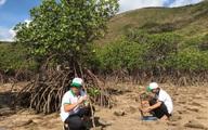 Bà Rịa - Vũng Tàu: Chuỗi hoạt động hưởng ứng Ngày Môi trường thế giới