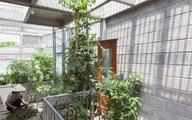 Ngôi nhà gạch khối và bê tông thoáng mát trong tiết trời nóng bức